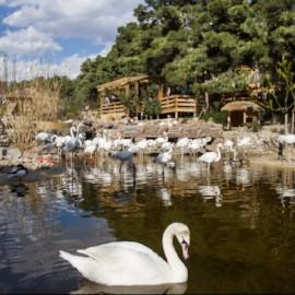 Birds garden، iran travel agencies ،Iran tour packages، tour operators in iran