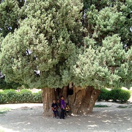 the Oldest creature in all of the world in heart of Iran، iran travel agencies ،Iran tour packages، tour operators in iran